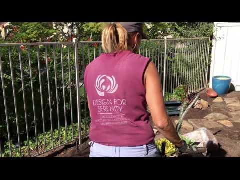 Succulent Jewel Box Garden Part 2