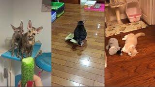 Приколы с котами 2020 Смешные коты и кошки 2020