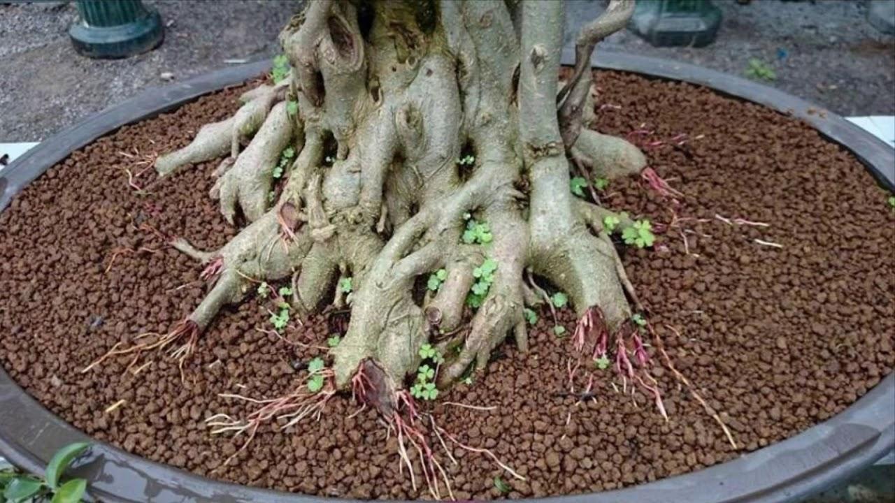 Công thức trộn hỗn hợp đất trồng cây cảnh (Phúc Bonsai)