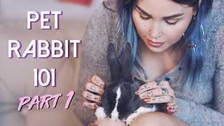 ARE RABBITS GOOD PETS?! Part I: How To Care For Rabbits
