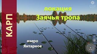 Русская рыбалка 4 озеро Янтарное Карп с мелкого мысочка