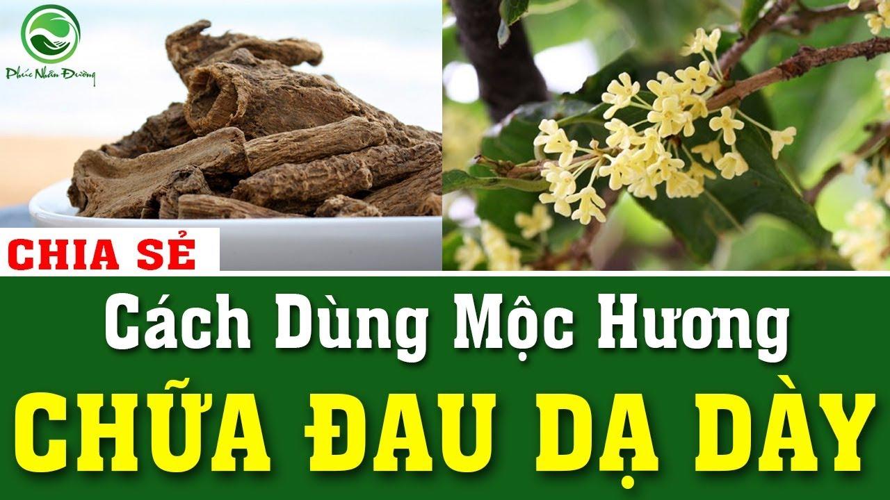 Chia sẻ cách dùng mộc hương chữa đau dạ dày