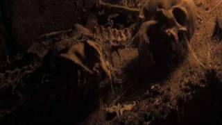 Midnight Chronicles - Deutscher Trailer (NewKSM)