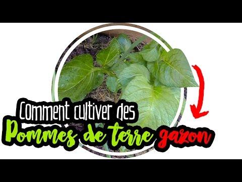 permaculture pomme de terre sur gazon bonus lectro culture youtube. Black Bedroom Furniture Sets. Home Design Ideas