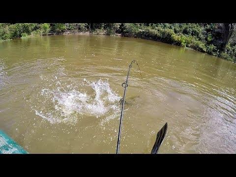 DIA DE MONSTROS! Pesca de grandes BAGRES.