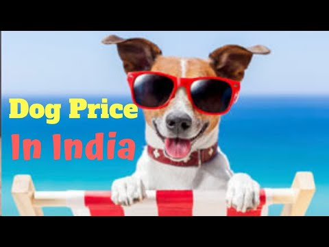 Dog price in India | amazing facts in hindi | Animal Channel Hindi