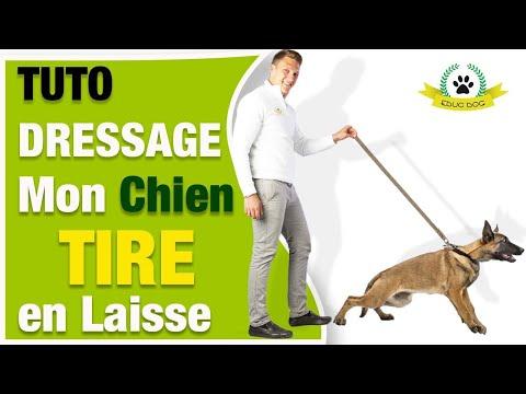 Couche Pour Chiot - 15 techniques à savoir - Education canine - Blog chien