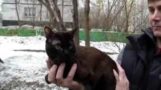 Питомник бурманских кошек Ангельский соболь системы PCA