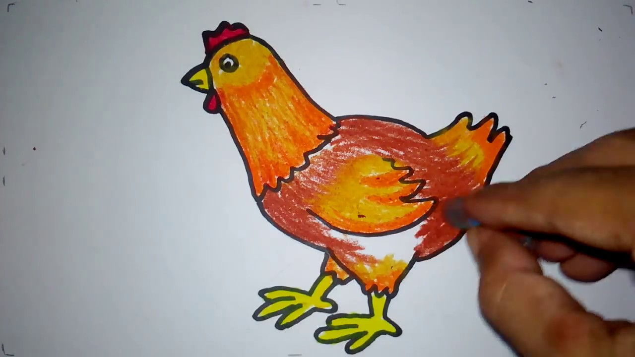100+ Gambar Ayam Yg Sudah Diwarnai Paling Keren