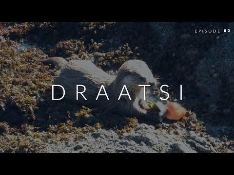 Draatsi - Episode 2: Otter Eats Octopus