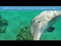 Eilat's Dolphin Reef