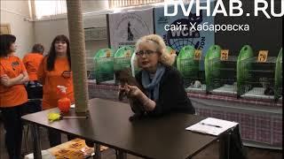 Корниш-рексы впервые стали одной из самых популярных пород на выставке кошек в Комсомольске