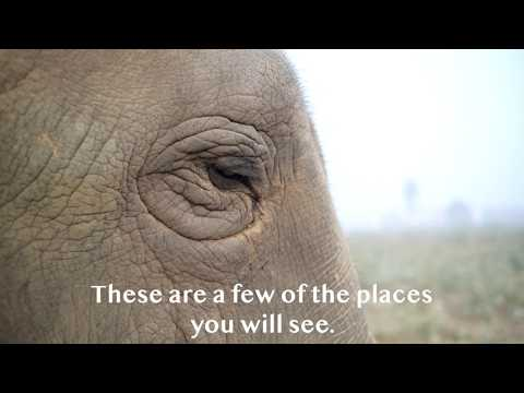 A Virtual Tour Of The Elephant Conservation & Care Center