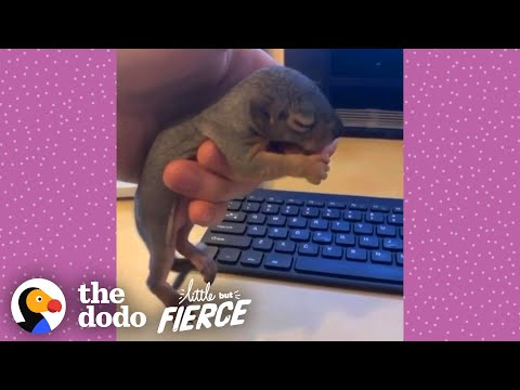 Guy Rescues Baby Squirrel And Reunites Him With Mom | The Dodo Little But Fierce