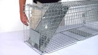How Set Havahart Feral Cat Trap Model