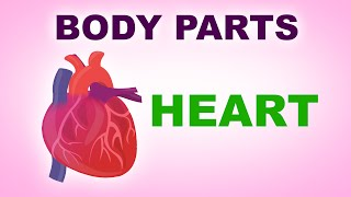 Heart - Human Body Parts -  Pre School Know Your Body - Animated Videos For Kids