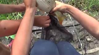 Рыбалка на кубани. Ачуево , Черный ерик, Лиманы, канал