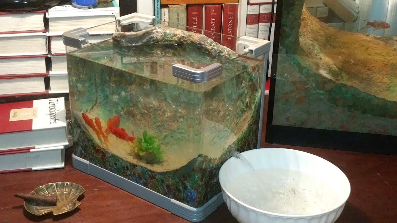 No clean aquarium betta fish tank - No Clean Aquarium Betta Fish Tank