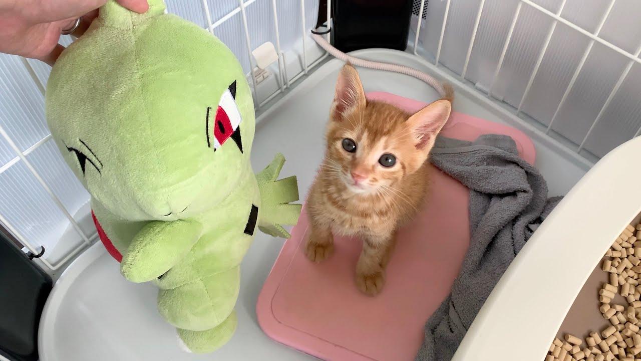 猛獣の仔猫に初めてぬいぐるみをあげてみた