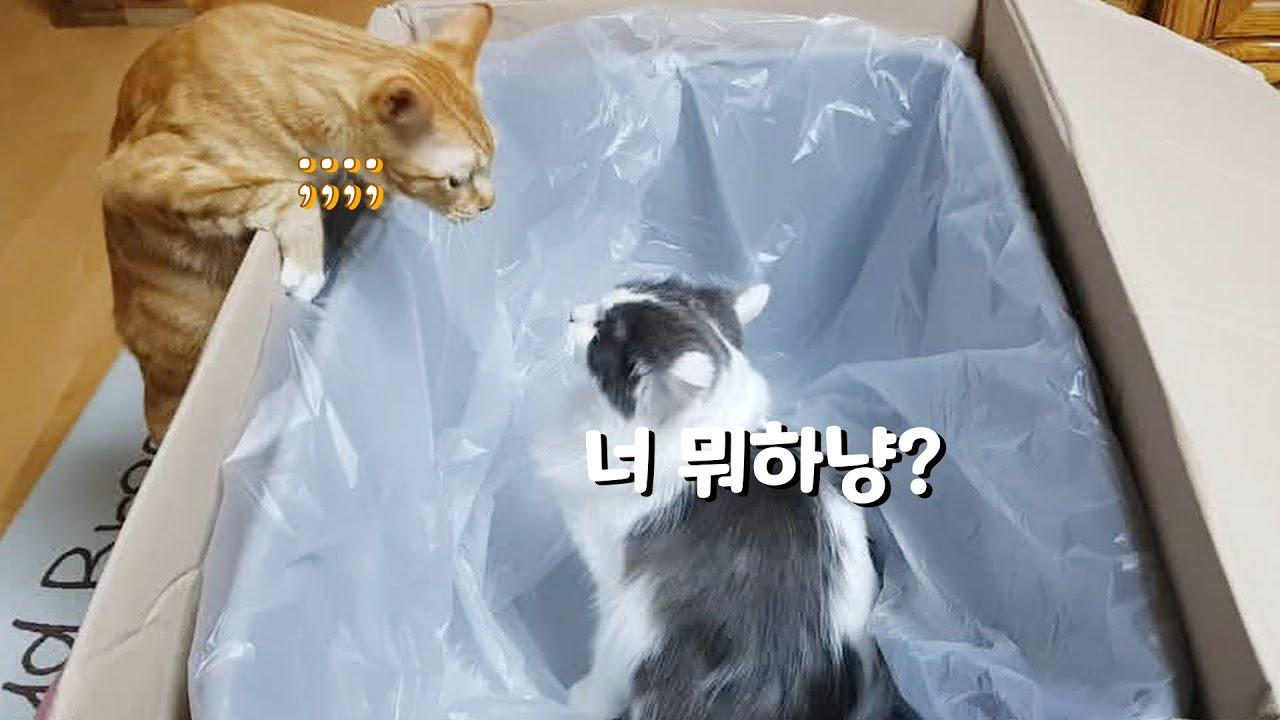 초대형 새 화장실이 마음에 든 고양이들
