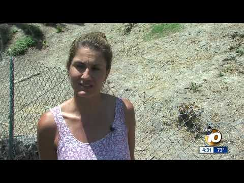 Sinkholes discovered on Oceanside school campus