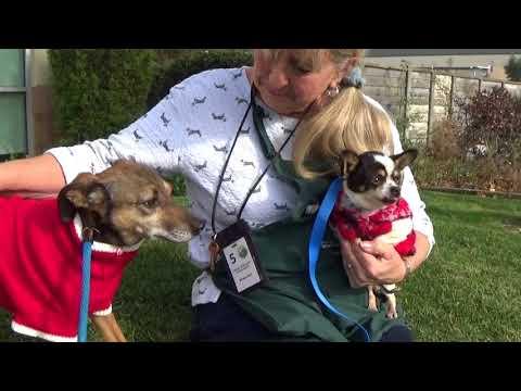 Please Adopt Ollie! Cute Terrier Mix 7 yr.