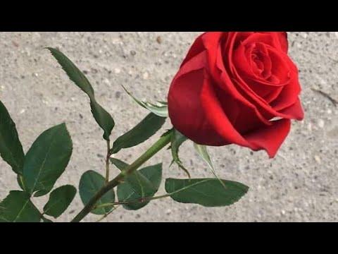 RIP PulsoUmbrio, lv Drafo vl, zSnipxr ll, BBOYnavidad99, elGibieALV