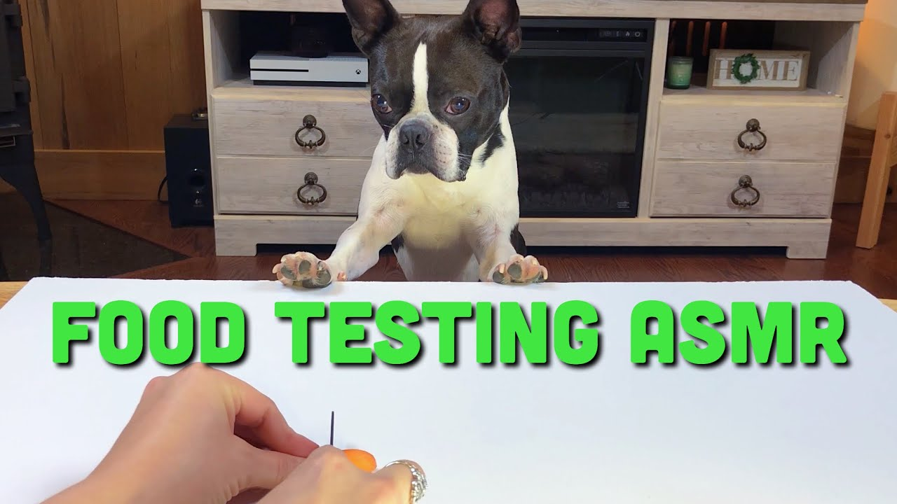 ASMR Dog Reviewing Different Types Of Food #1 | Atlas The Boston Terrier