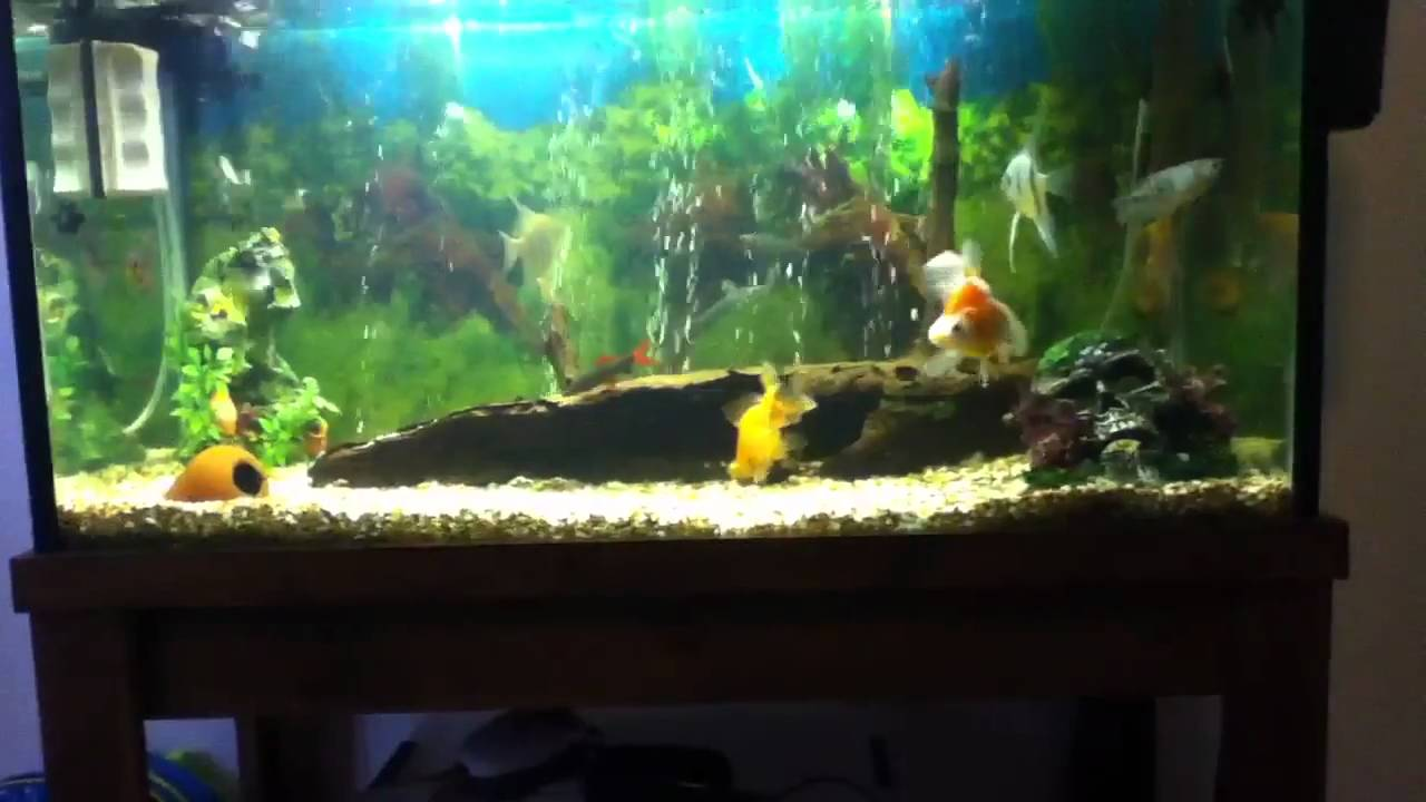 Update on 3ft 45 gallon fish tank youtube for How many gallons is my fish tank