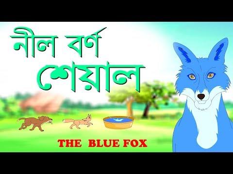 The Blue Jackal | The Blue Fox