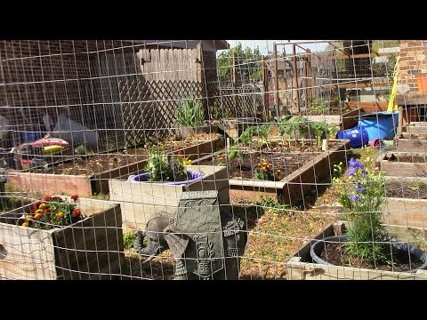 Planting the summer garden in zone 9