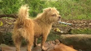 Puerto Rico Dog Sanctuary Run by Former Army Captain Perseveres Despite Hurricane Maria Damage