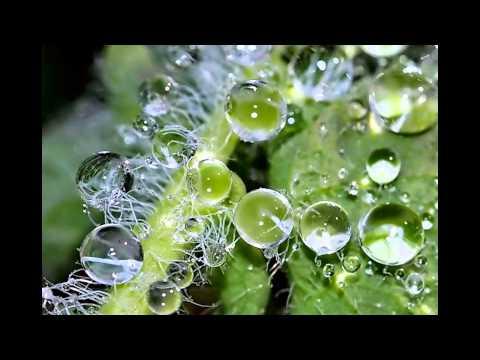 Капля воды - искусство природы. Очень красиво