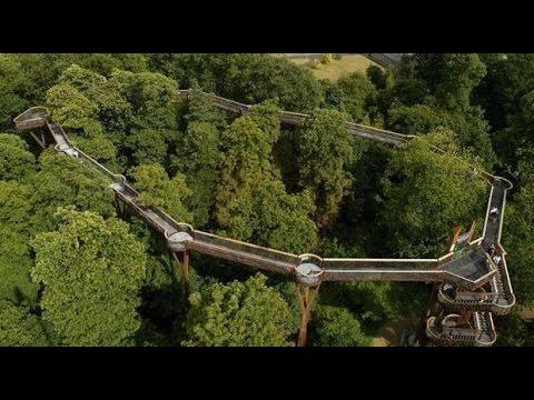 The Tree Top Walkway at Royal Botanic Gardens, Kew #kewgardens #kew #treetopwalkway