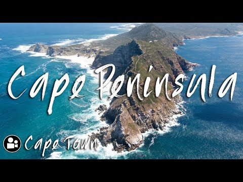 Baby Baboon Looks straight into GoPro on Cape Point Tour | Things to do in Cape Town