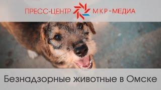 Безнадзорные животные в Омске
