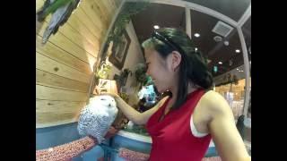 Tokyo Owl Cafe - Tori No Iru - Pet Owls