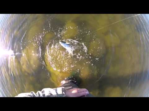 Trout Fishing In Estonia / Wildest.ee