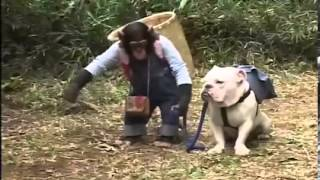 Phim | Tinh tinh dắt chó đi hái hạt dẻ | Tinh tinh dat cho di hai hat de