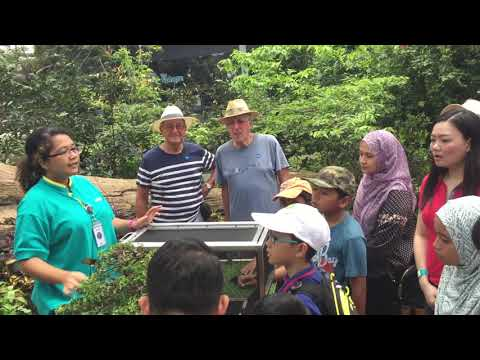 Zootopia Penang Butterfly Release Activity