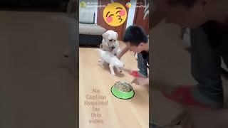 Dog forever