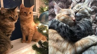 They Brought Home A Shelter Kitty To Give Their Adopted Cat Company  A Week Later…
