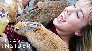 Cuddle With Rabbits In Japan