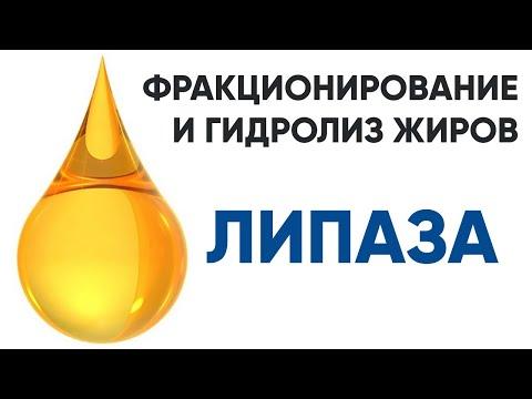 Липаза ENZIM - фермент для расщепления жира - описание, применение, купить, цена