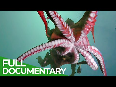 Mysterious Tentacles | Blue Realm | Free Documentary Nature