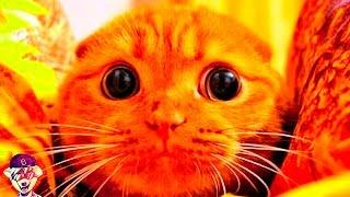 Что если кот хочет Вас убить...