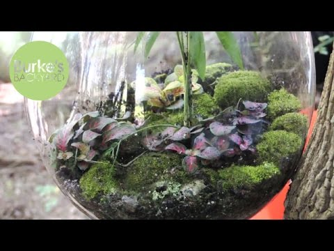 Making New Terrarium & cheap plants