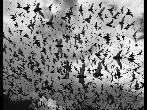 Millions of Bats Flying Out Of Cave!!!