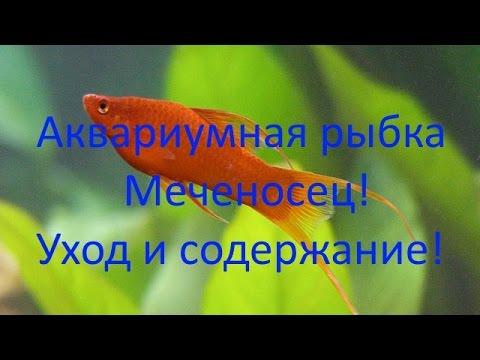 Какие рыбки подойдут для аквариума 30 литров