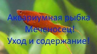 Аквариумная рыбка Меченосец! Уход и содержание! [#Меченосец]